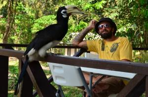 Hornbill on Koh Ra