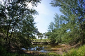 Preserving wetland near Koh Ra Beach Camp